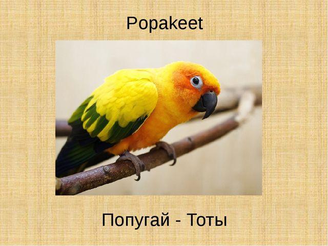 Popakeet Попугай - Тоты