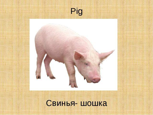Pig Свинья- шошка