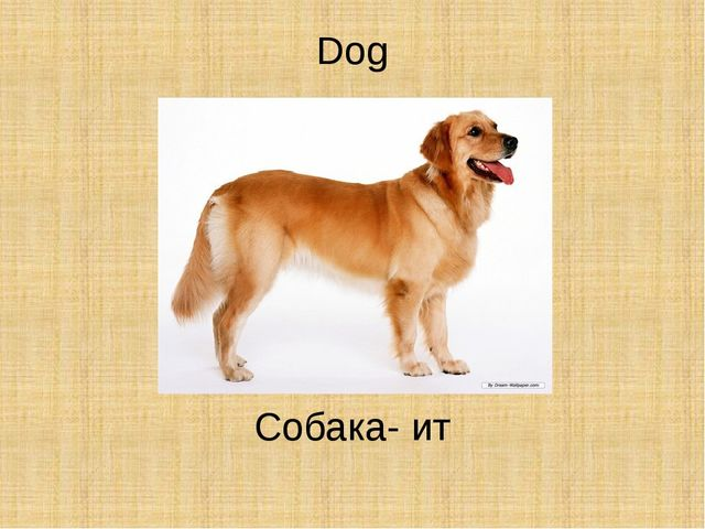 Dog Собака- ит