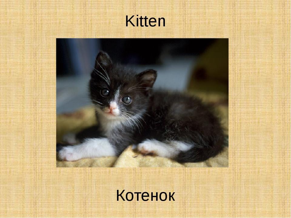 Kitten Котенок