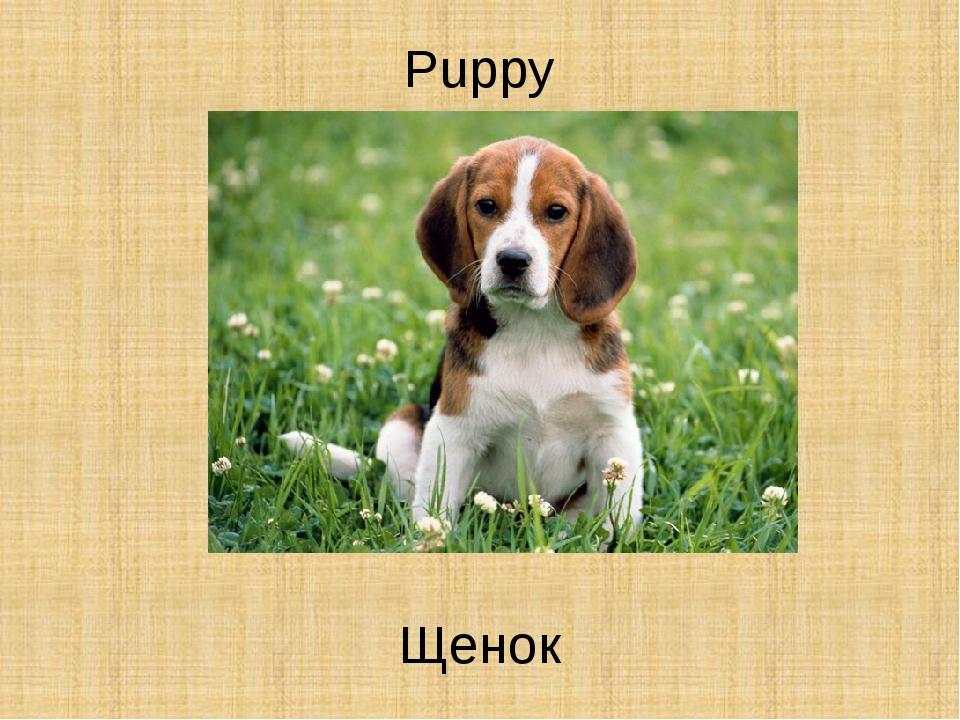 Puppy Щенок