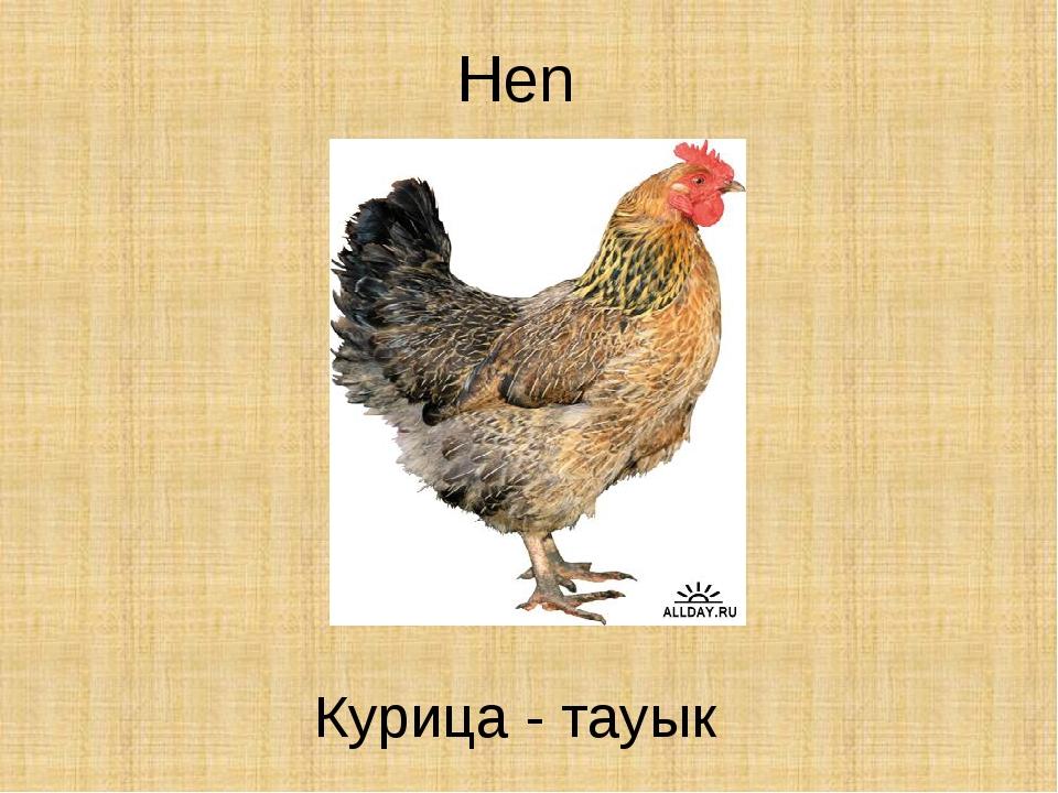 Hen Курица - тауык
