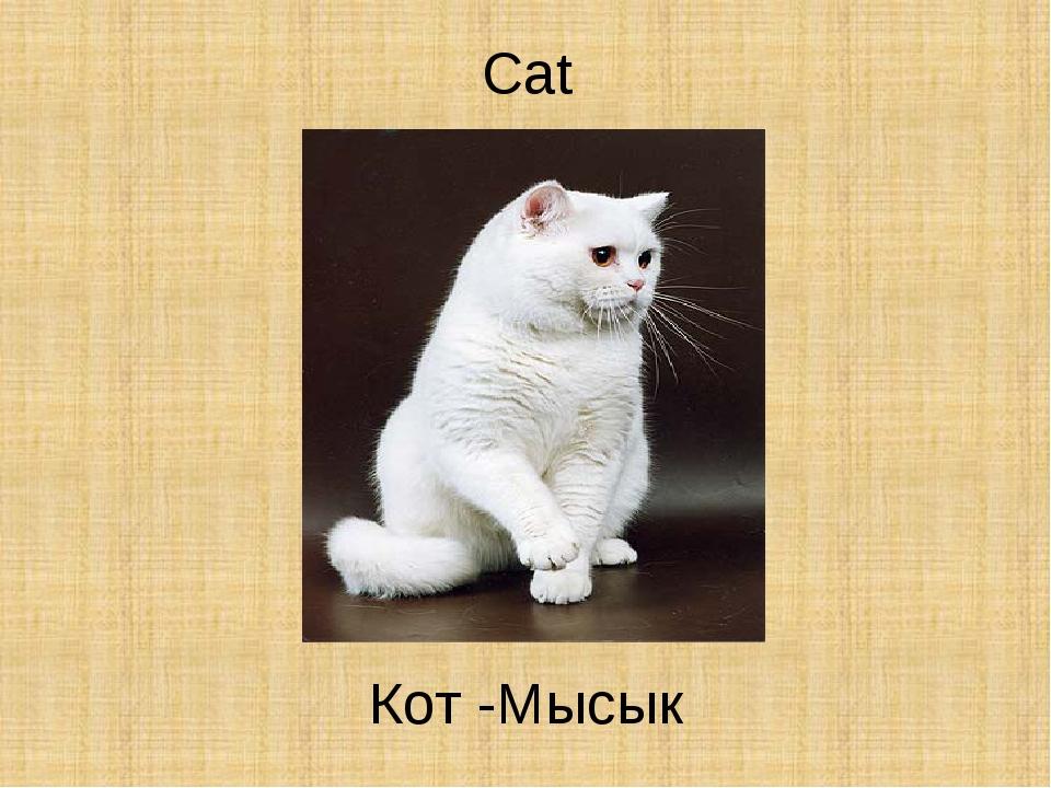 Cat Кот -Мысык
