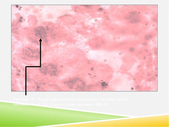 Рисунок 10. Политенные хромосомы клеток слюнных желёз личинок black (b) II в...