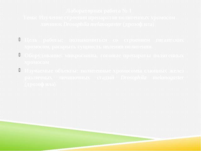 Лабораторная работа № 1 Тема: Изучение строения препаратов политенных хромосо...