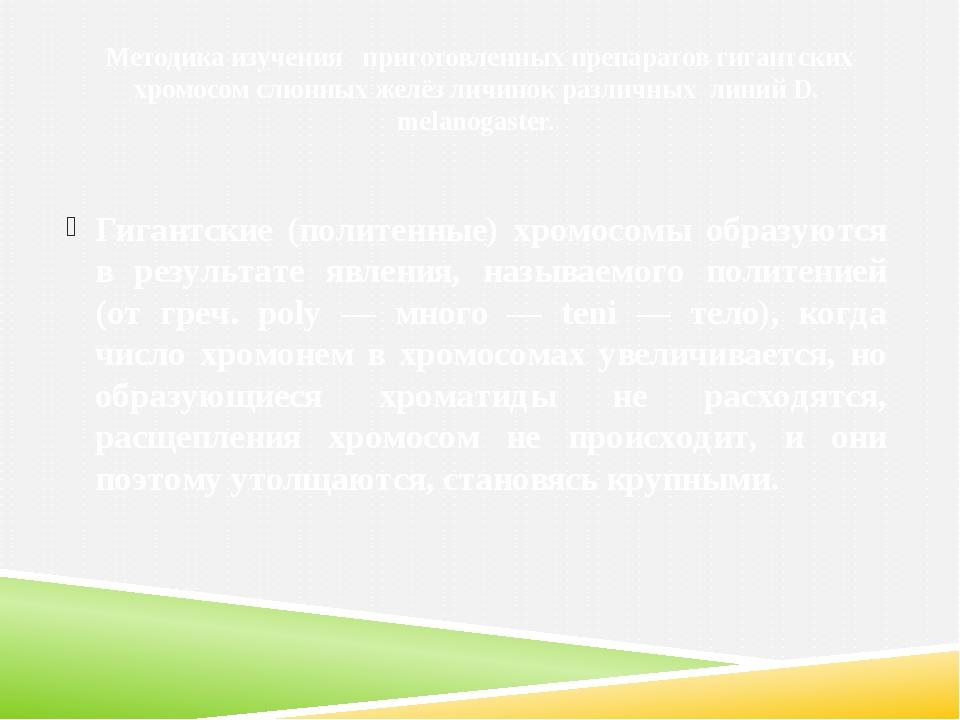Методика изучения приготовленных препаратов гигантских хромосом слюнных желё...
