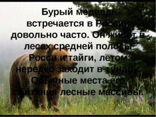 Бурый медведь встречается в России довольно часто. Он живёт в лесах средней