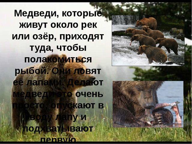 Медведи, которые живут около рек или озёр, приходят туда, чтобы полакомиться...