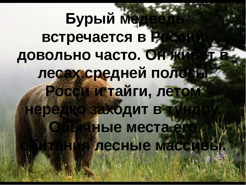 Бурый медведь встречается в России довольно часто. Он живёт в лесах средней...