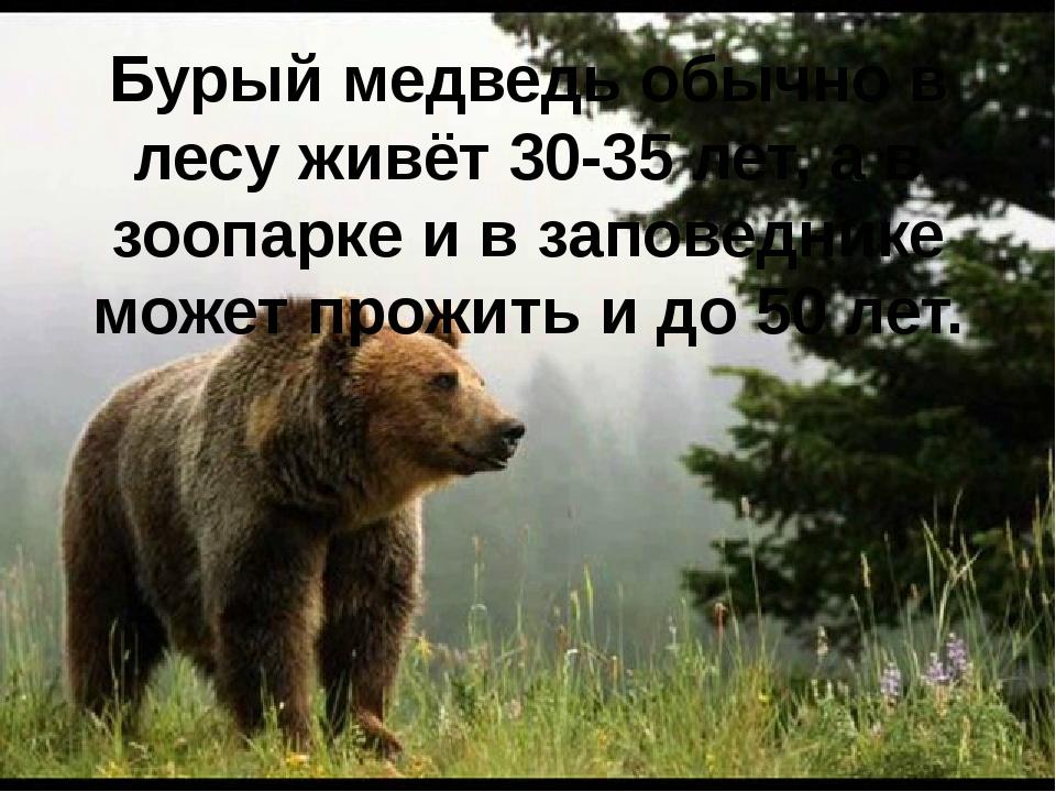 Бурый медведь обычно в лесу живёт 30-35 лет, а в зоопарке и в заповеднике мож...