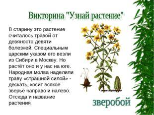 В старину это растение считалось травой от девяносто девяти болезней. Специал