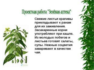 Свежие листья крапивы прикладывают к ранам для их заживления. Засахаренные ко