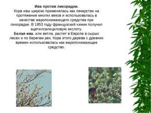 Ива против лихорадки. Кора ивы широко применялась как лекарство на протяжение