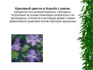 Красивый цветок в борьбе с раком. Катарантус или розовый барвинок. Препараты,