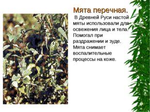 Мята перечная. В Древней Руси настой мяты использовали для освежения лица и т