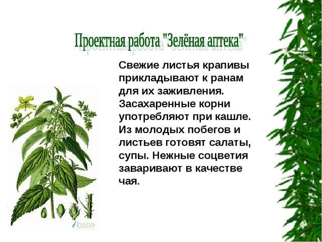 Свежие листья крапивы прикладывают к ранам для их заживления. Засахаренные ко...