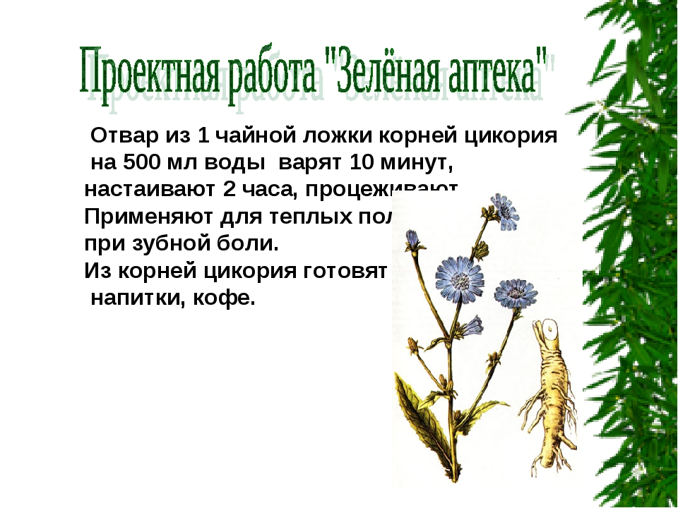 Отвар из 1 чайной ложки корней цикория на 500 мл воды варят 10 минут, настаи...