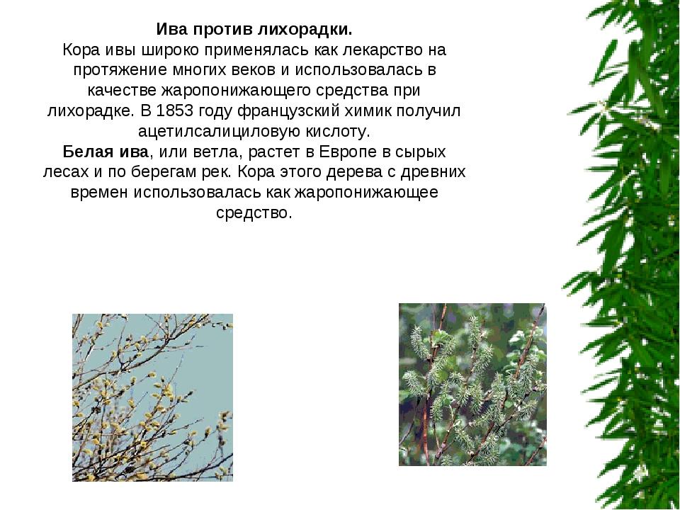 Ива против лихорадки. Кора ивы широко применялась как лекарство на протяжение...