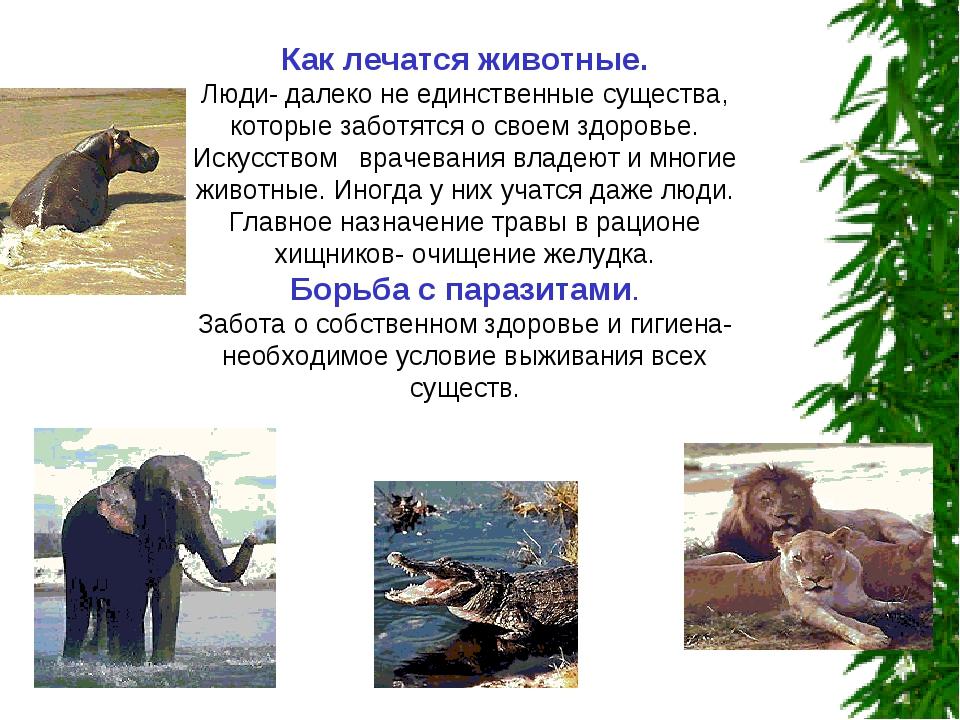 Как лечатся животные. Люди- далеко не единственные существа, которые заботятс...