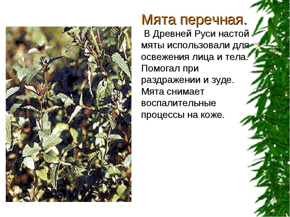 Мята перечная. В Древней Руси настой мяты использовали для освежения лица и т...