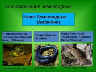 Классификация земноводных Класс Земноводные (Амфибии) Отряд Бесхвостые Земнов