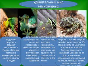 Удивительный мир земноводных Радужная лягушка – предмет поклонения в Индии. Л
