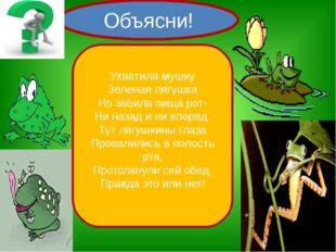 Объясни! Ухватила мушку Зеленая лягушка Но забила пища рот- Ни назад и ни вп