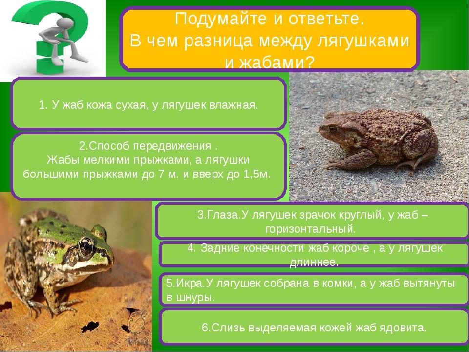 Подумайте и ответьте. В чем разница между лягушками и жабами? 1. У жаб кожа с...