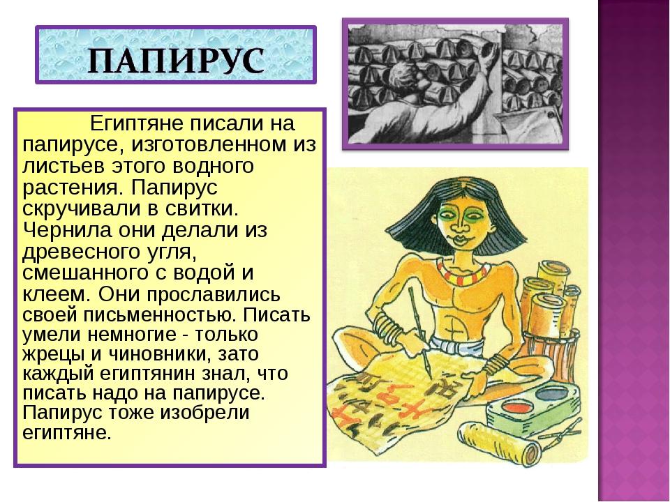 Египтяне писали на папирусе, изготовленном из листьев этого водного растения...