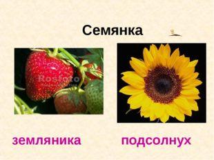 Семянка земляника подсолнух