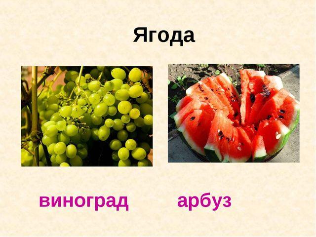 Ягода виноград арбуз