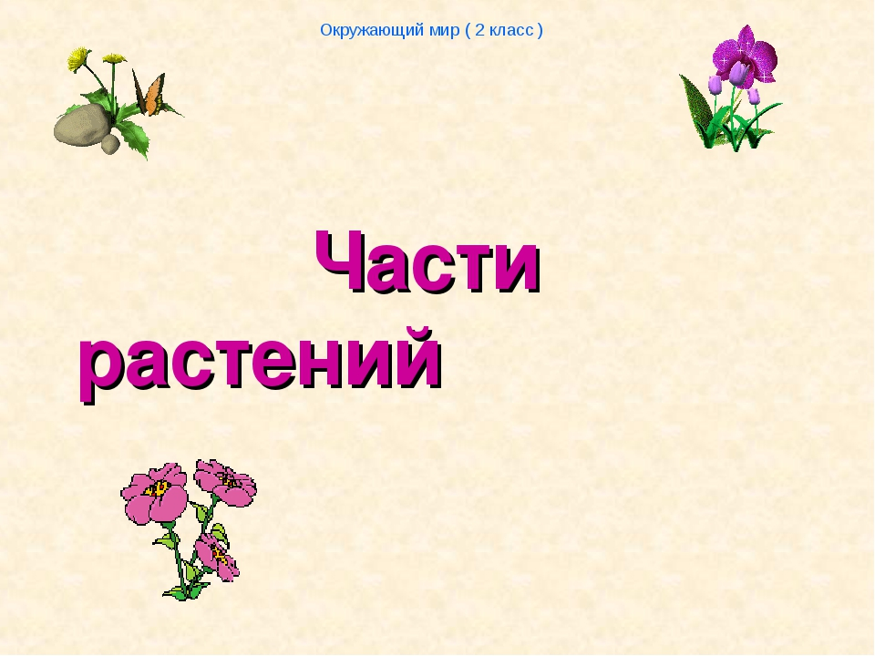 Части растений Окружающий мир ( 2 класс )