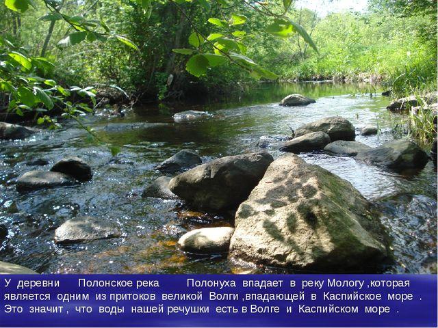 У деревни Полонское река Полонуха впадает в реку Мологу ,которая является одн...