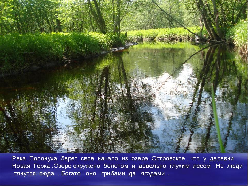 Река Полонуха берет свое начало из озера Островское , что у деревни Новая Гор...