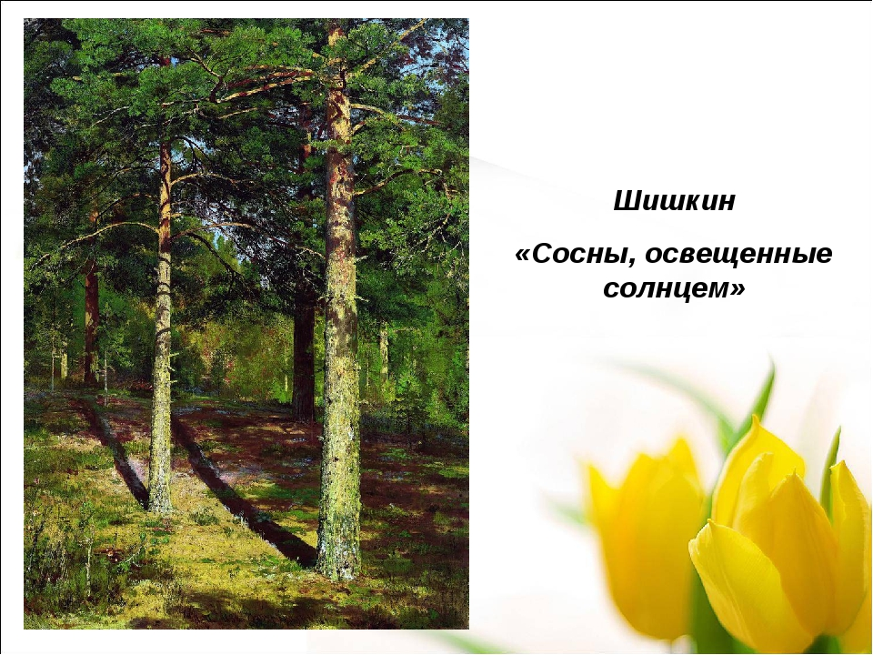Шишкин «Сосны, освещенные солнцем»
