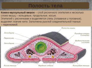 Кожно-мускульный мешок– слой ресничного эпителия и несколько слоев мышц – ко