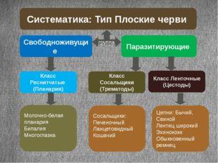 Систематика: Тип Плоские черви группа Свободноживущие Паразитирующие Класс Ре