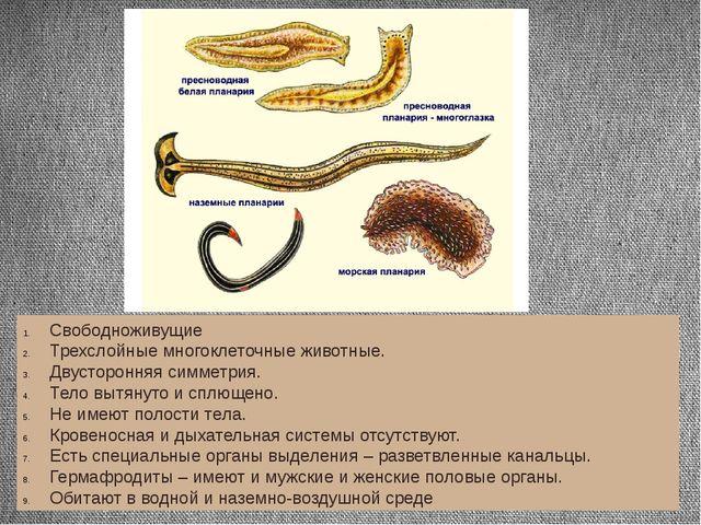 Свободноживущие Трехслойные многоклеточные животные. Двусторонняя симметрия....