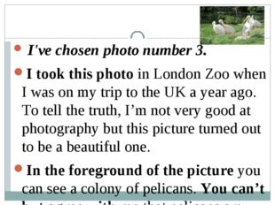 I'vechosenphotonumber3. I took this photoin London Zoo when I was on