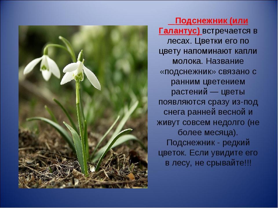 легко растения красной книги крыма фото и описание элементы бисероплетении плетутся