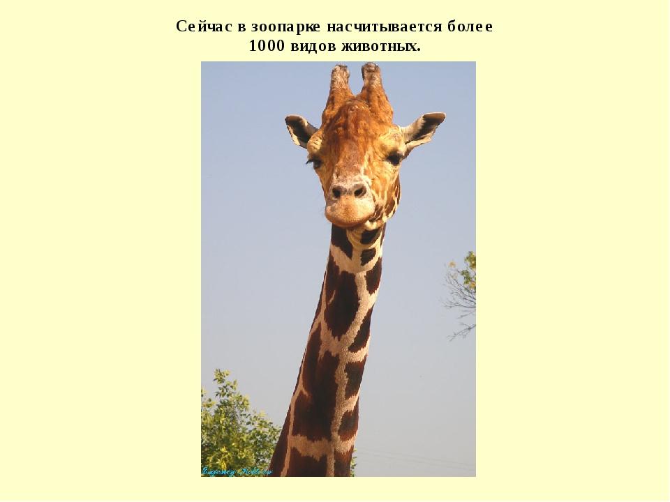 Сейчас в зоопарке насчитывается более 1000 видов животных.