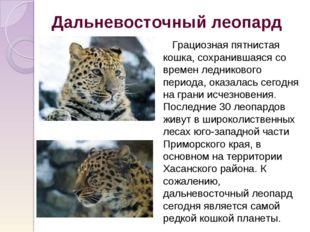 Дальневосточный леопард Грациозная пятнистая кошка, сохранившаяся со времен л