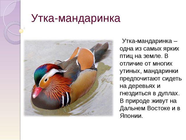 Утка-мандаринка Утка-мандаринка – одна из самых ярких птиц на земле. В отличи...