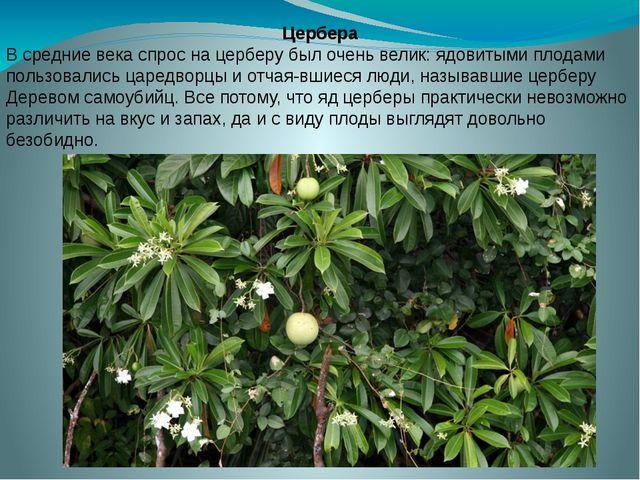 Цербера В средние века спрос на церберу был очень велик: ядовитыми плодами по...