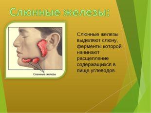 Слюнные железы выделяют слюну, ферменты которой начинают расщепление содержащ