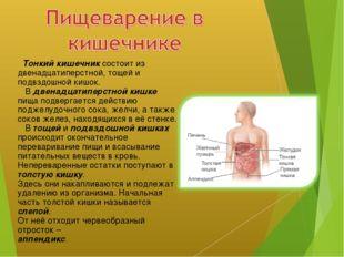 Тонкий кишечник состоит из двенадцатиперстной, тощей и подвздошной кишок. В