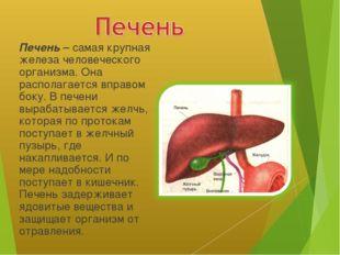 Печень – самая крупная железа человеческого организма. Она располагается впр