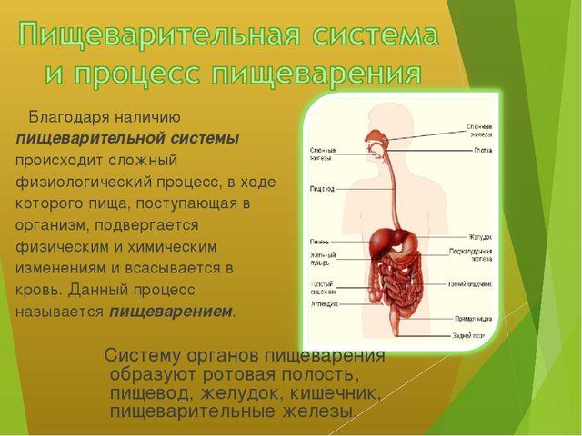 Благодаря наличию пищеварительной системы происходит сложный физиологический...