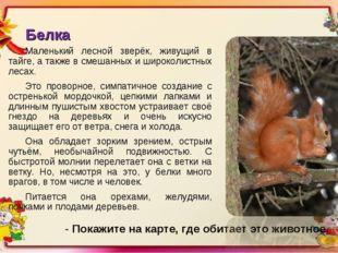 Белка Маленький лесной зверёк, живущий в тайге, а также в смешанных и широкол