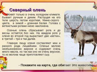 Северный олень Живёт только в очень холодном климате. Бывает ручным и диким.